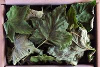 Blackcurrant leaves
